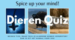 Spice up your mind – Dieren Quiz